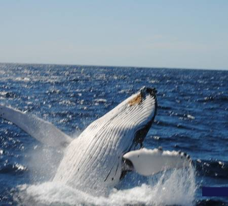 From Sydney: Whale Watching Cruise With Breakfast On Board