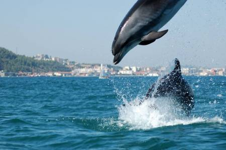 From Lisbon: 4X4 Trip & Catamaran Tour To See The Arrábida Dolphins