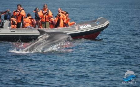 From Portimão: 1H30 Boat Tour To Watch Wild Dolphins In The Ocean