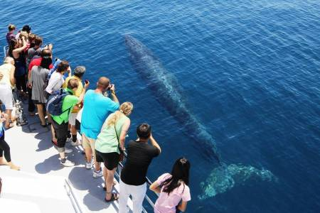 4H30 Whale & Dolphin Watching Catamaran Tour From Auckland