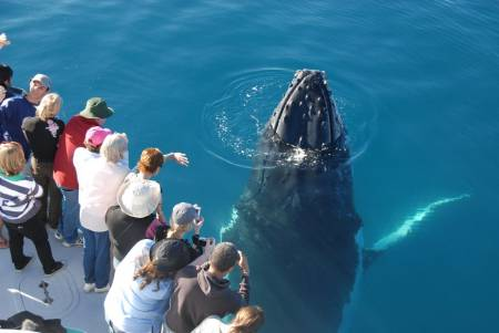 5-Hour Whale Watching Cruise On Hervey Bay