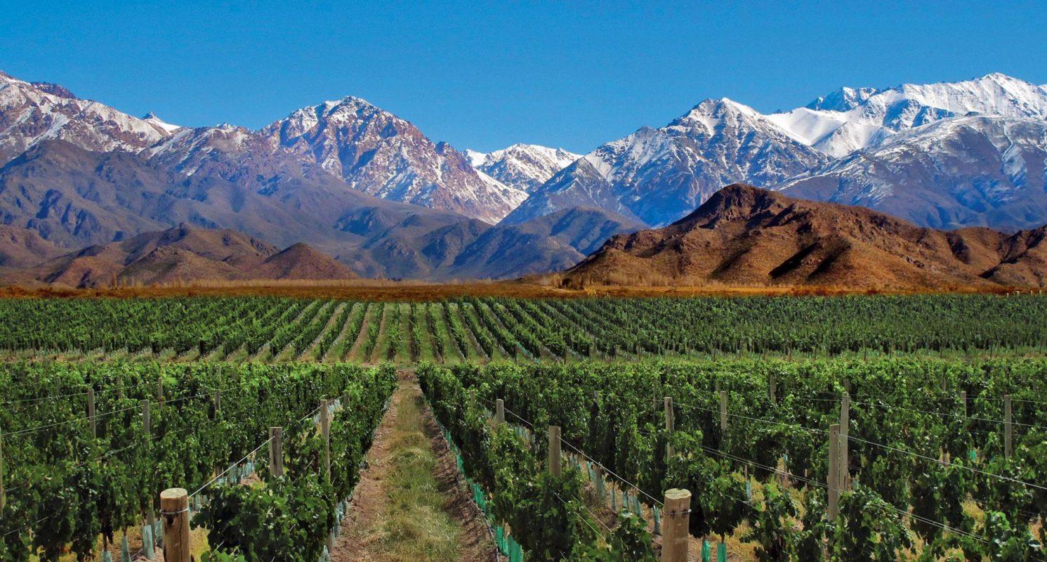 Half Day Wine Tasting Tour In Vineyards From Mendoza
