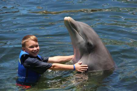 Splash And Wade Program: Swim With Dolphins In Key Largo