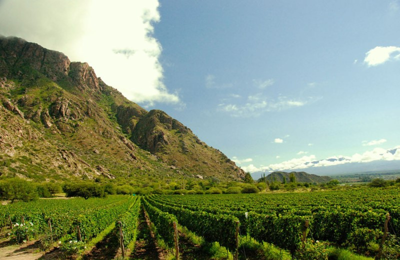 Excursion To The Argentine Wine Route Departing From Salta