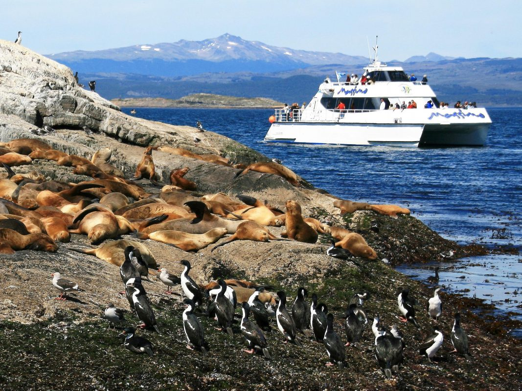 From Ushuaia: Beagle Channel Boat Tour With Sea Lions' Island