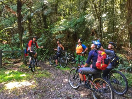 From Rotorua: Cycling Tour In Redwoods, Dinner & Stand-Up-Paddle Tour In The Glowworm Cave