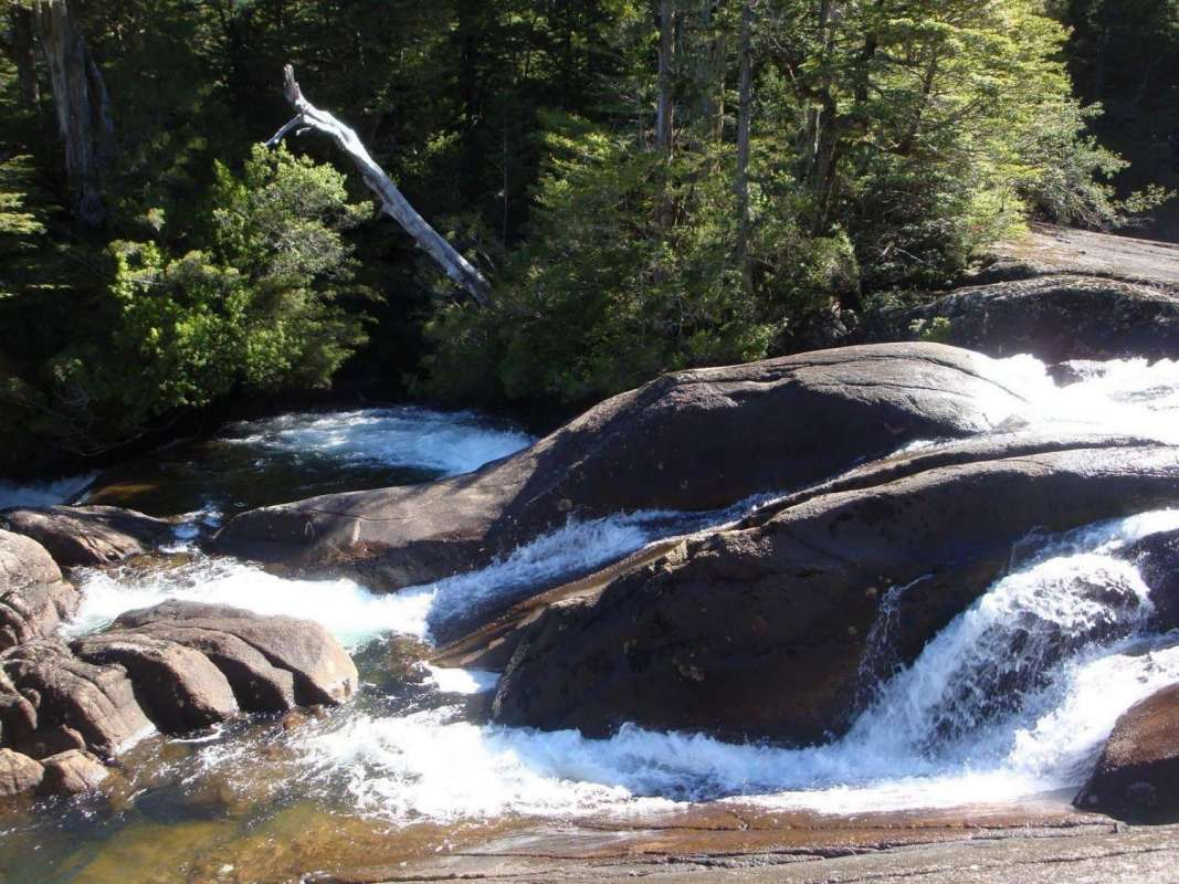 From Bariloche: Half-Day Boat Tour To Puerto Blest And Cantaros Falls