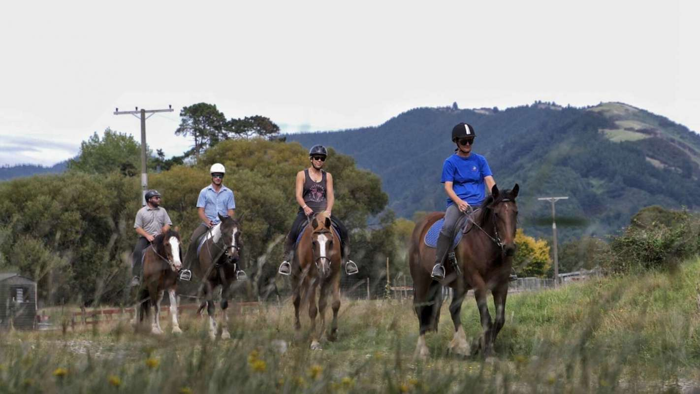 2.5-Hour Horse Riding On The Cable Bay Adventure Park