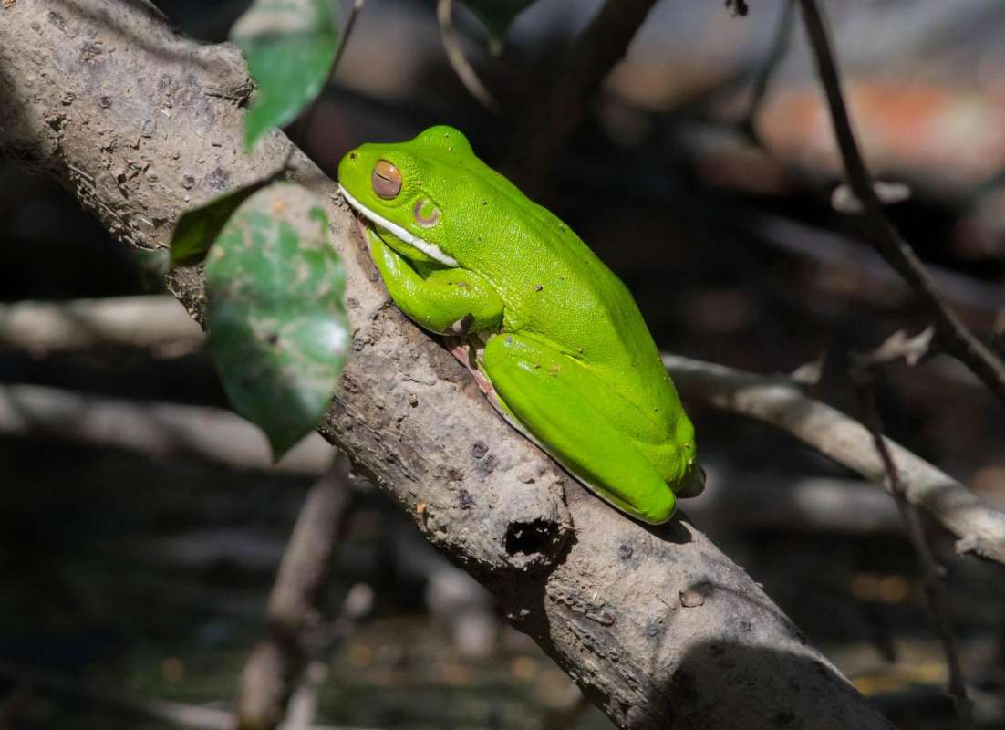 From Cairns: Full-Day Tour To The Daintree Rainforest With Cruise