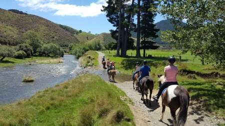 Montar A Caballo De 2.5 Horas En El Cable Bay Adventure Park