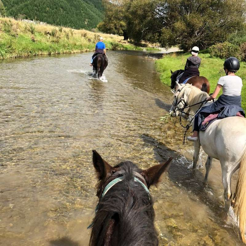 1-Hour Horse Riding On The Cable Bay Adventure Park