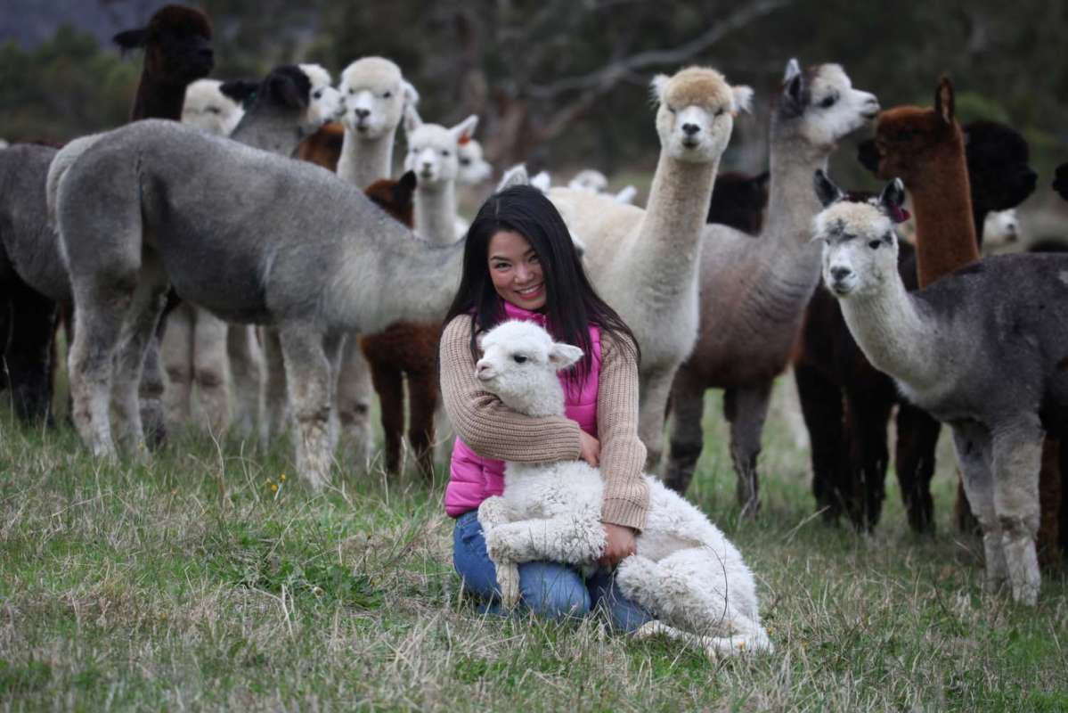 2-Hour Guided Tour To The Softfoot Alpaca Farm