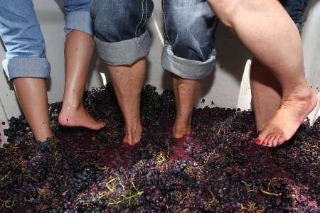 Vallée Du Douro: Visite Des Récoltes De Raisins Avec Piétinement Des Raisins Et Dégustation De Vin
