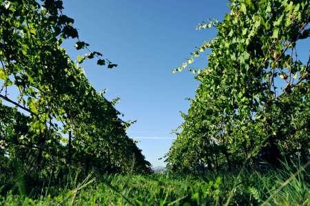 Desde Oporto: Excursión A La Región De Vinho Verde Con Catas De Vino Y Almuerzo