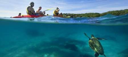 Byron Bay: 3 Horas De Passeio De Caiaque No Mar E Observação De Golfinhos