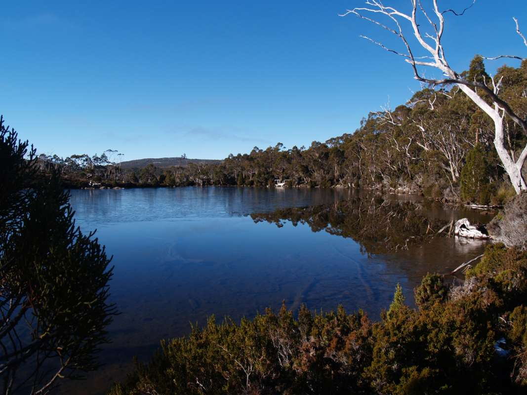 Full-Day Excursion To Mount Field, Mount Wellington And Tassie Devils Starting From Hobart