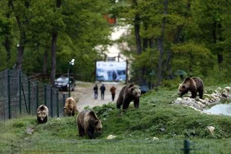 Zarnesti - Bear Sanctuary
