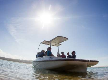 From Faro: Ria Formosa Private Birdwatching Boat Tour