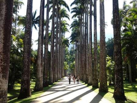 Botanischer Garten von Rio de Janeiro