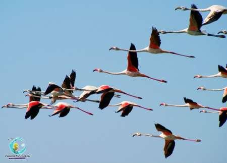 Desde Cabanas De Tavira: Tour En Bote Por La Ruta De Los Flamencos En La Ría Formosa