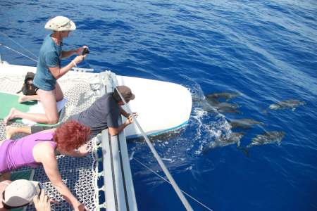 Madeira Island: Jeep Tour, Visit To Winery & Catamaran Tour To Watch Dolphins & Whales