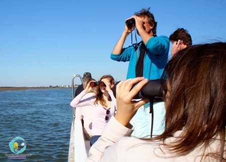 From Cabanas De Tavira: 2-Hour Bird Watching Boat Tour In Ria Formosa