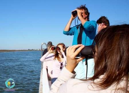 Desde Cabanas De Tavira: Tour De 2 Horas En Barco Para Observar Aves En Ria Formosa