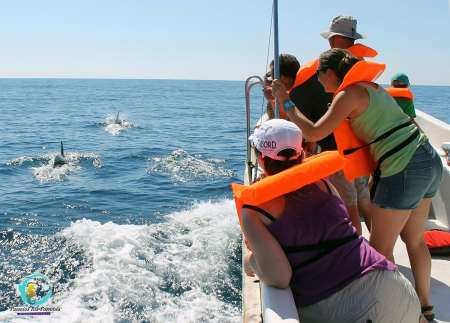From Olhão: 2,5-Hour Dolphin Watching Boat Tour