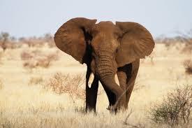 Tarangire, Manyara, Serengeti & Ngorongoro Safari