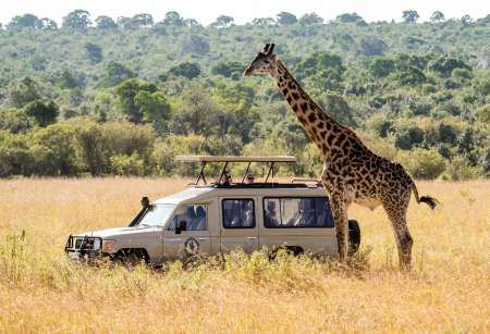 6-Day Luxury Lodging Safari In Tanzania