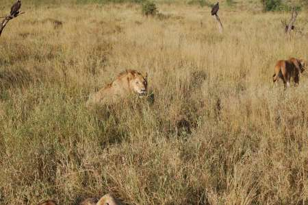 4-Day Tanzania Camping Safari To Tarangire, Serengeti & Ngorongoro Crater