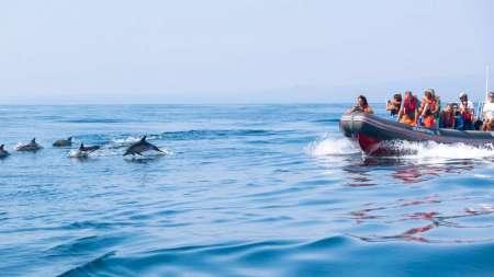 Desde Albufeira: 1H30 Visita De Delfines En Un Rib Boat