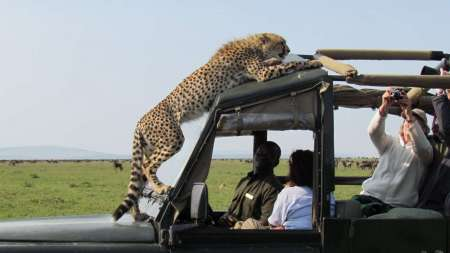 8-Day Semi-Luxury Safari Trip With Wildlife Lodge In Tanzania