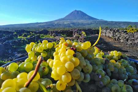 Pico Island: 4X4 Excursion To Vineyards With Regional Lunch