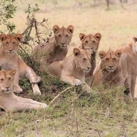 10-Day Trip With Serengeti Safari And Zanzibar Beach Holiday