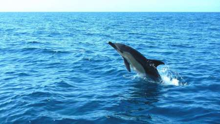 3-Hour Dolphin Watching Boat Tour In Arrábida