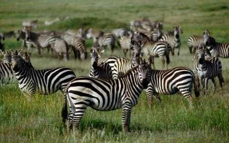 2 Jours De Safari Avec Camping Economical Plus En Tanzanie