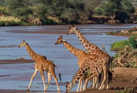 9-Day Budget Mid-Range Safari Trip In Tanzania