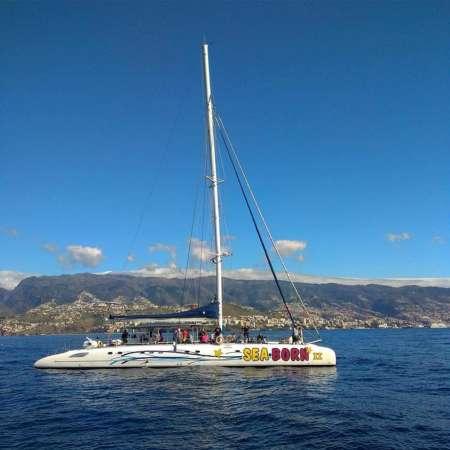 Île De Madère: Catamaran D'une Demi-Journée Au Départ De Funchal