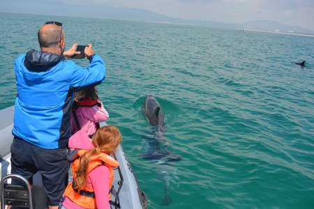 From Lisbon: Dolphin Watching Boat Tour In Sesimbra