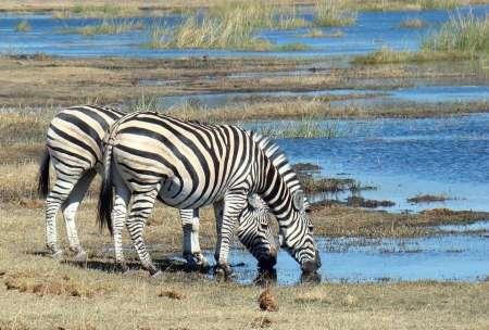 Wirtschaftssafari 6 Tage Camp In Tansania