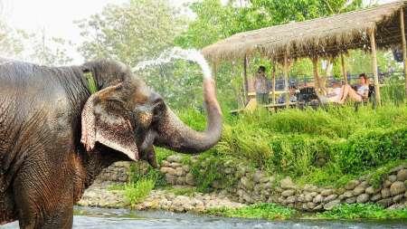 Entspannende Nepal-Tour Mit Elefanten-Sorgfalt