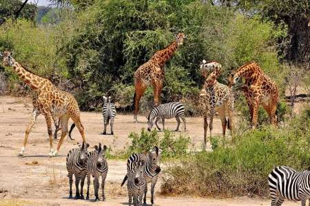 4 Days Budget Mid-Range Safari Tour In Tanzania