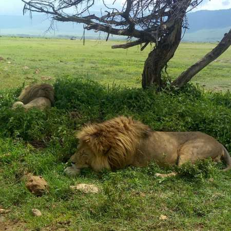 3 Days Safari In Tanzania: Tarangire, Ngorongoro And Lake Manyara