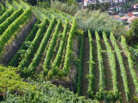 Madeira Island: Full-Day Private Tour Of Wine And Poncha