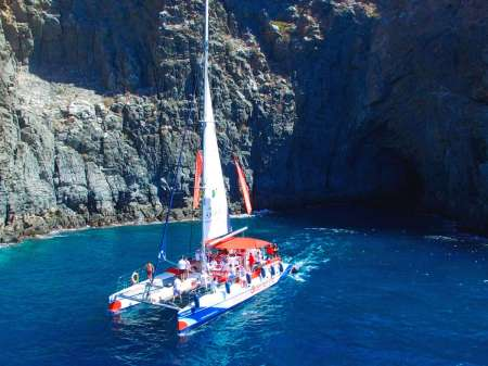 5-Hour Whale & Dolphin Watching Tour In Catamaran In Tenerife