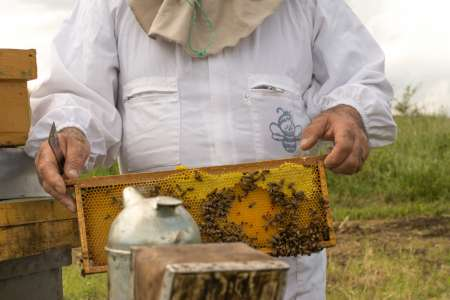 Abruzzo: 2-Hour Beekeeping Experience With Tastings