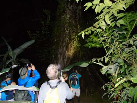 From Drake Bay: Night Hiking Excursion In The Forests Of Corcovado National Park