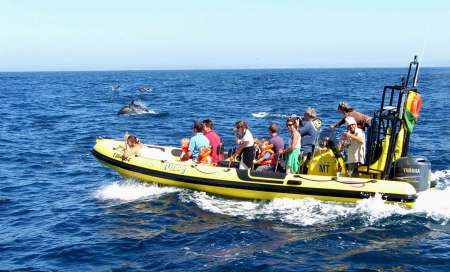 Lagos: Algarve Dolphin Watching Boat Tour