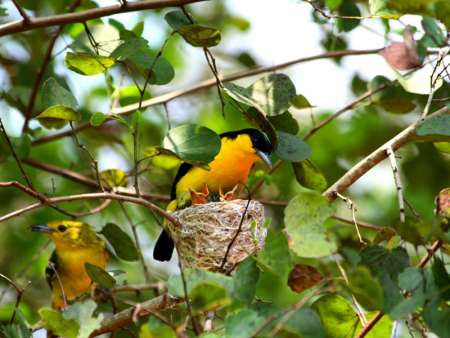 9-Day Bird Watching Experience In Sri Lanka